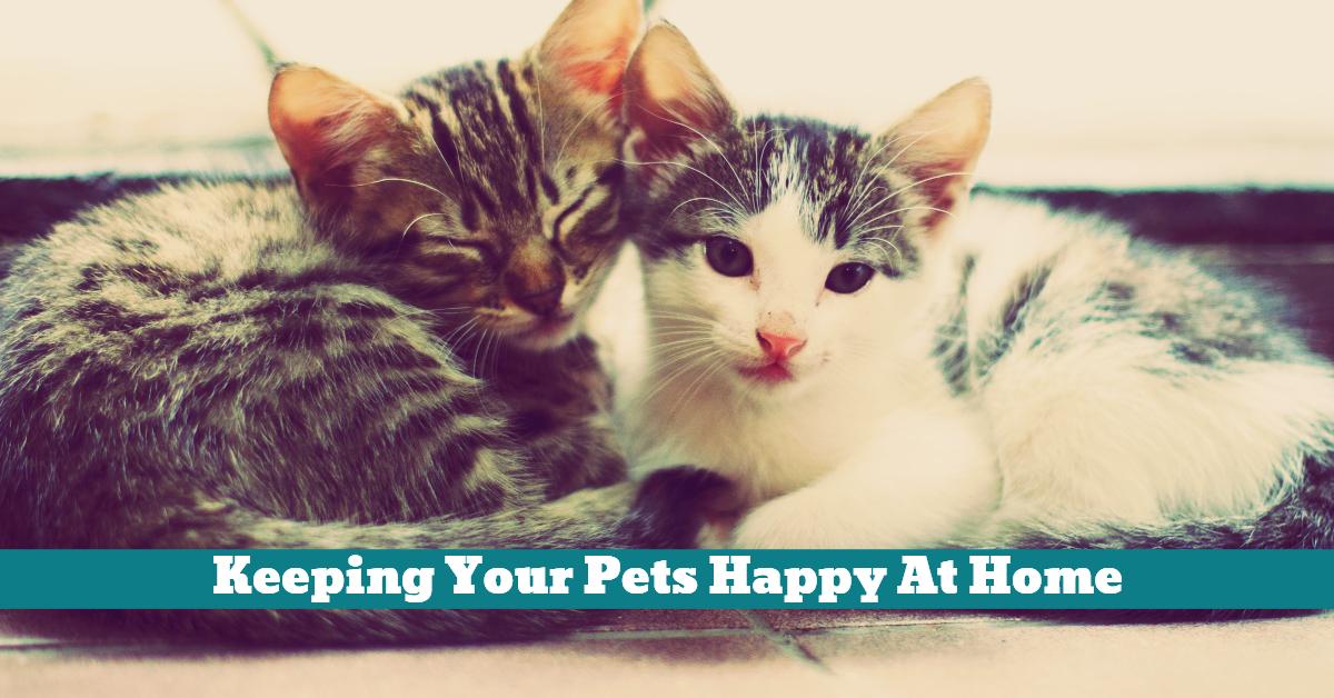 Pets_Home_Happy