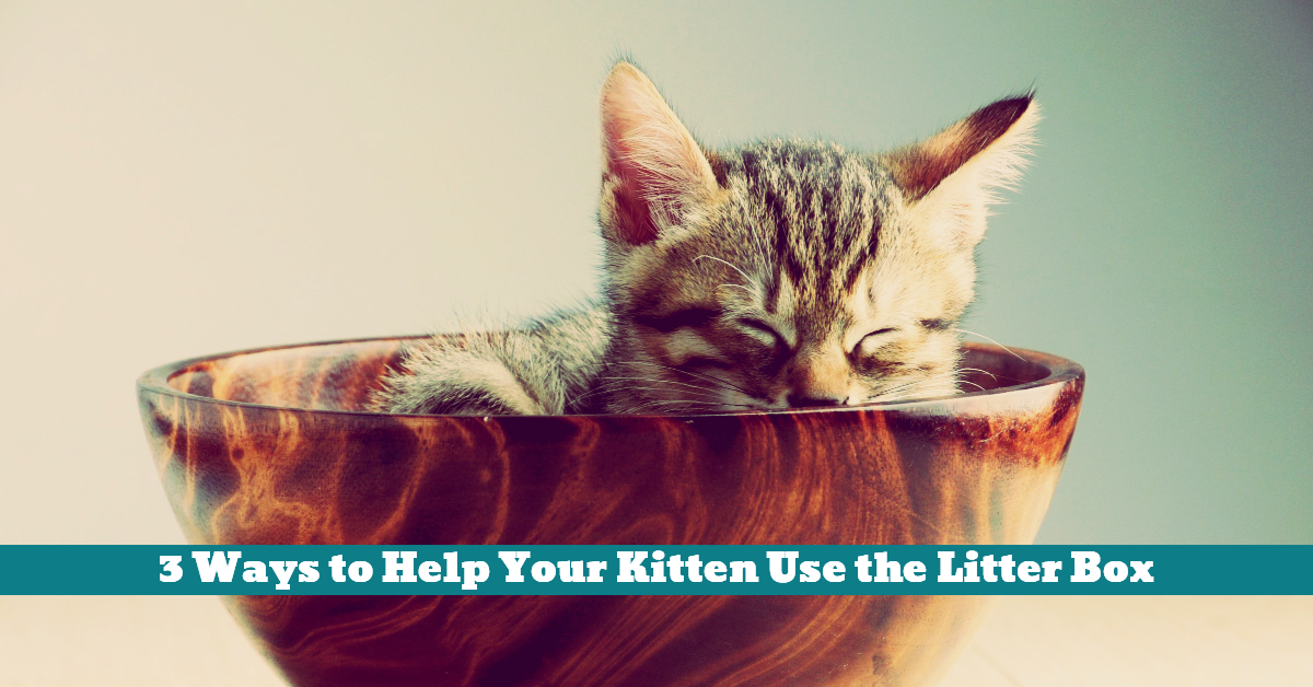 Cat_Kitten_Litter_Box_Tray