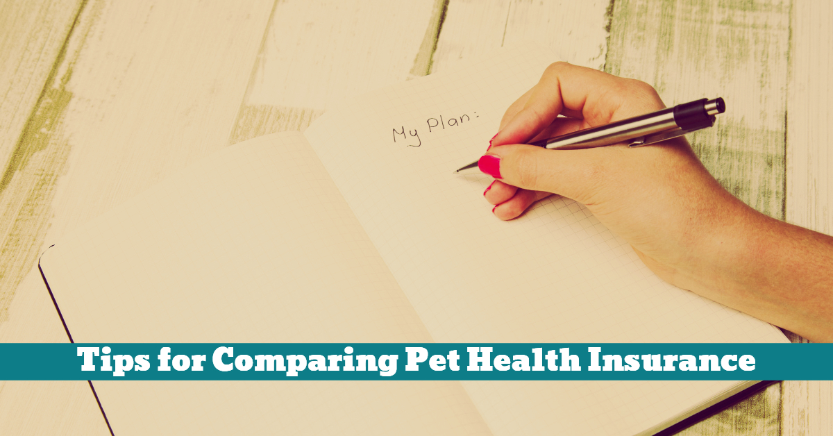 Pet_Insurance_Plan_Vet_Company_Pamphlet_Policy