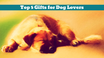 Top 5 Gifts for Dog Lovers