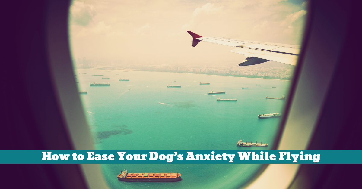 Dog_Flying_Crate_Cargo_Anxiety_Exercise_