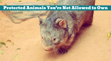 Protected Animals You're Not Allowed to Own