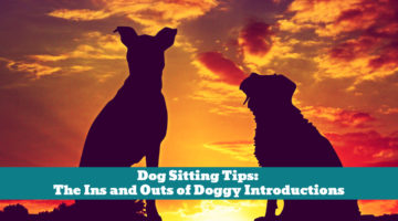 Dog Sitting Tips: The Ins and Outs of Doggy Introductions