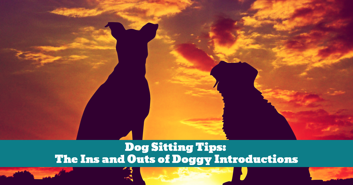 Dog_Commands_Sit_Sitting