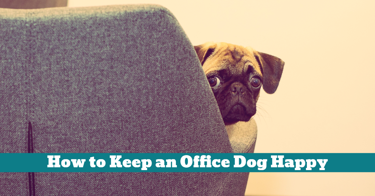 Dog_Work_Office_Building_Safe_Cables_Electric_Wires_Doors_Exits