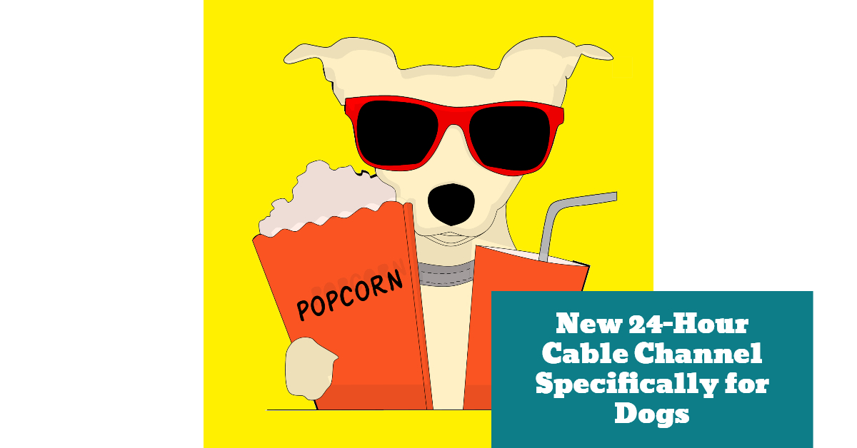 Dog_Canine_24_Hour_Cable_Channel