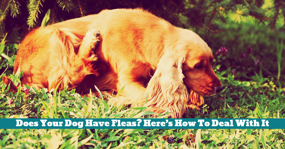 Dog_Fleas_Itching_Scratching_Hair_Loss_Patches_Bathing