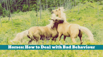Horses: How to Deal with Bad Behaviour