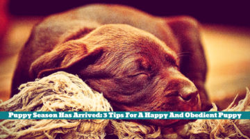 Puppy Season Has Arrived: 3 Tips For A Happy And Obedient Puppy