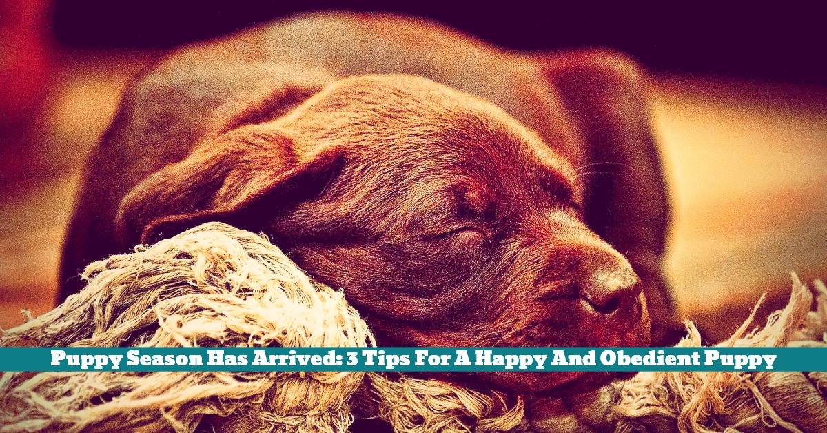 Dog_Puppy_Obedient_Calm_Restful_Season
