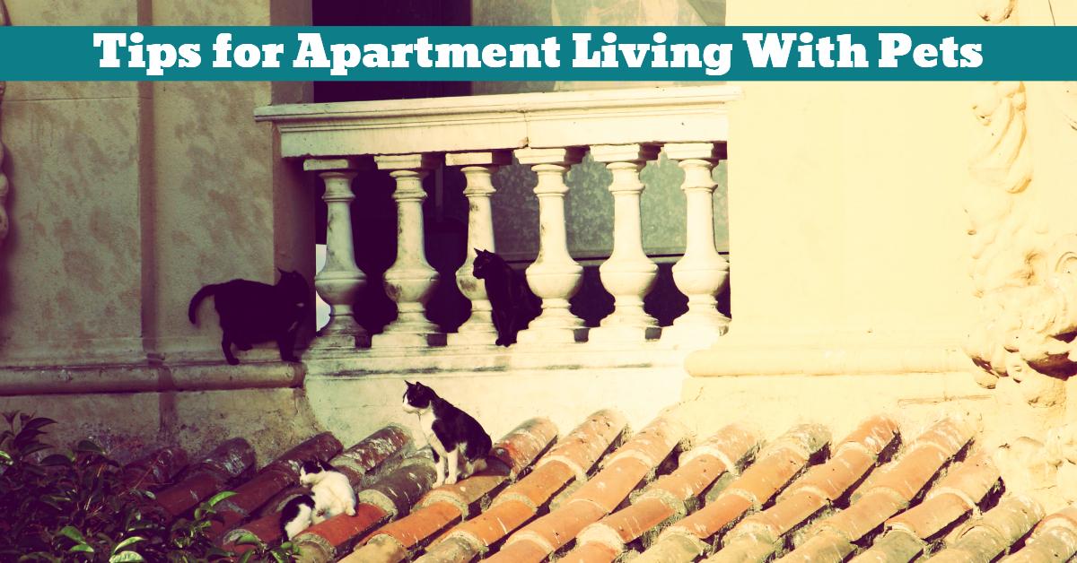 Pet_Accommodation_Living_Apartment_Studio