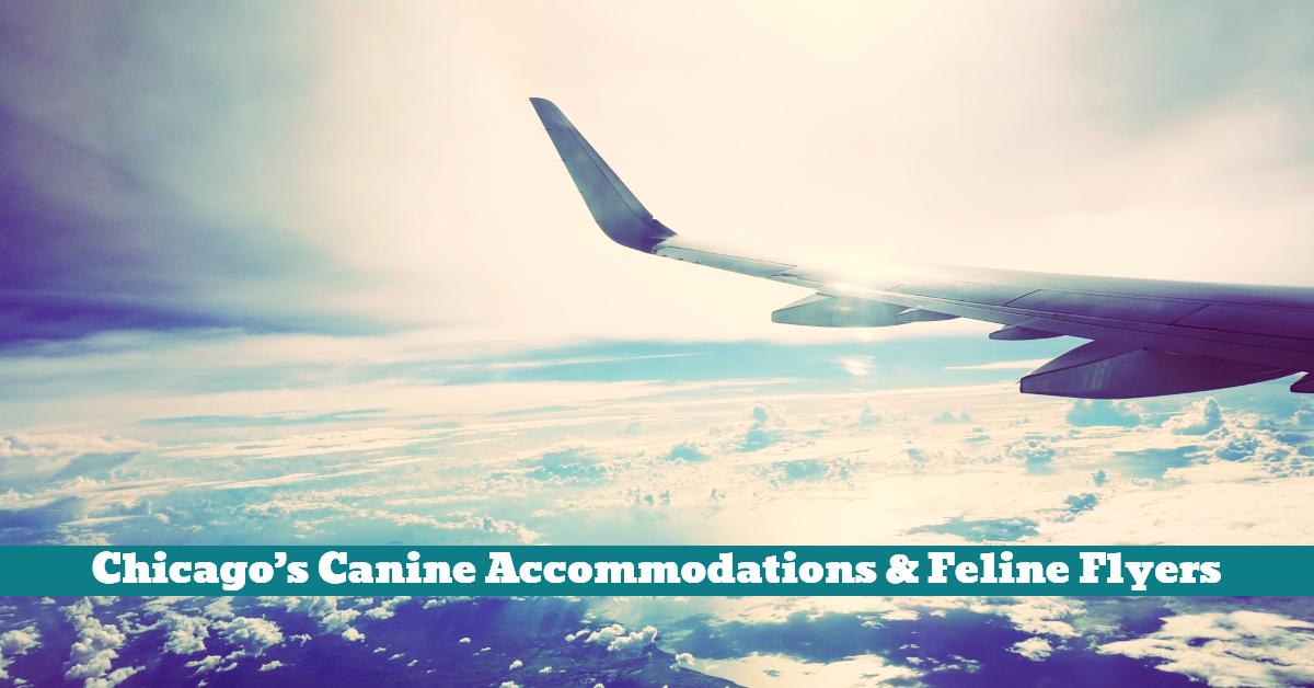 Pet_Cat_Dog_Airline_Airport_Travel_Flight_Plane_Accommodation
