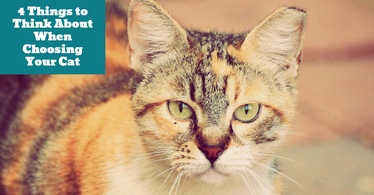 Cat_Choices_Variety_Breed_Temperament_Lifestyle