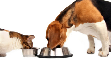 Four Nutrition Tips From One Pet Owner To Another
