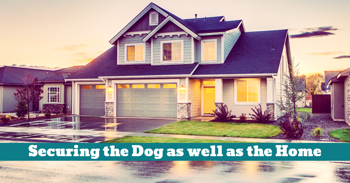 Dog_Home_Security_Surveillance_Protection