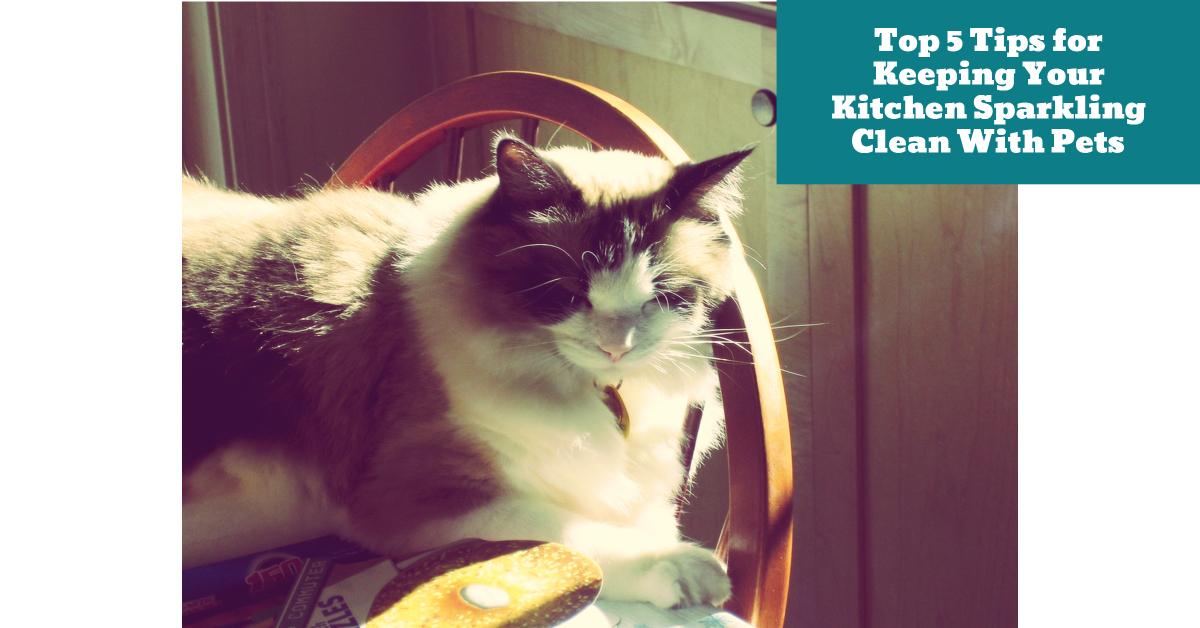 Cat_Kitchen_Clean_Hygiene_Safe