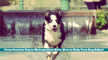 From Country Dog to Metropolitan Diva- How to Help Your Dog Adjust