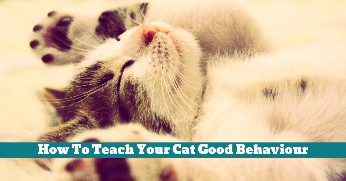 Cat_Behaviour_Teach_Train_Spray_Bottle