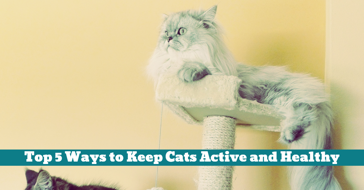 Cat_Health_Scratching_Climbing_Post_Rest_Litter_Box_Area