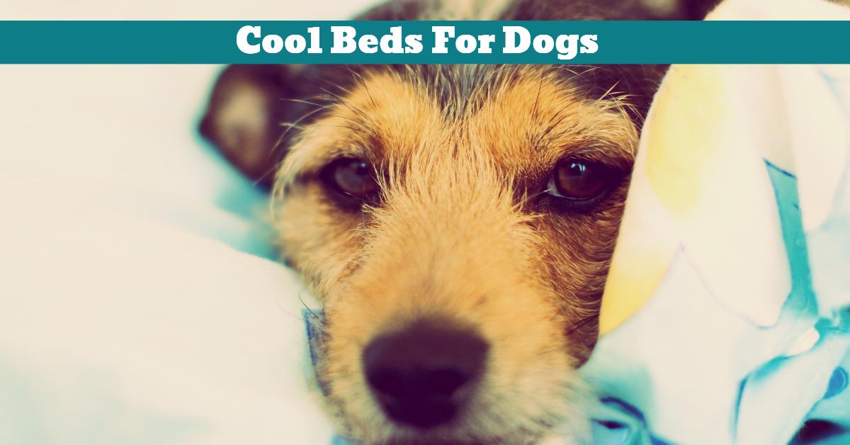 Dog_Beds_Mooii_Doggles_Caddis_Beasley