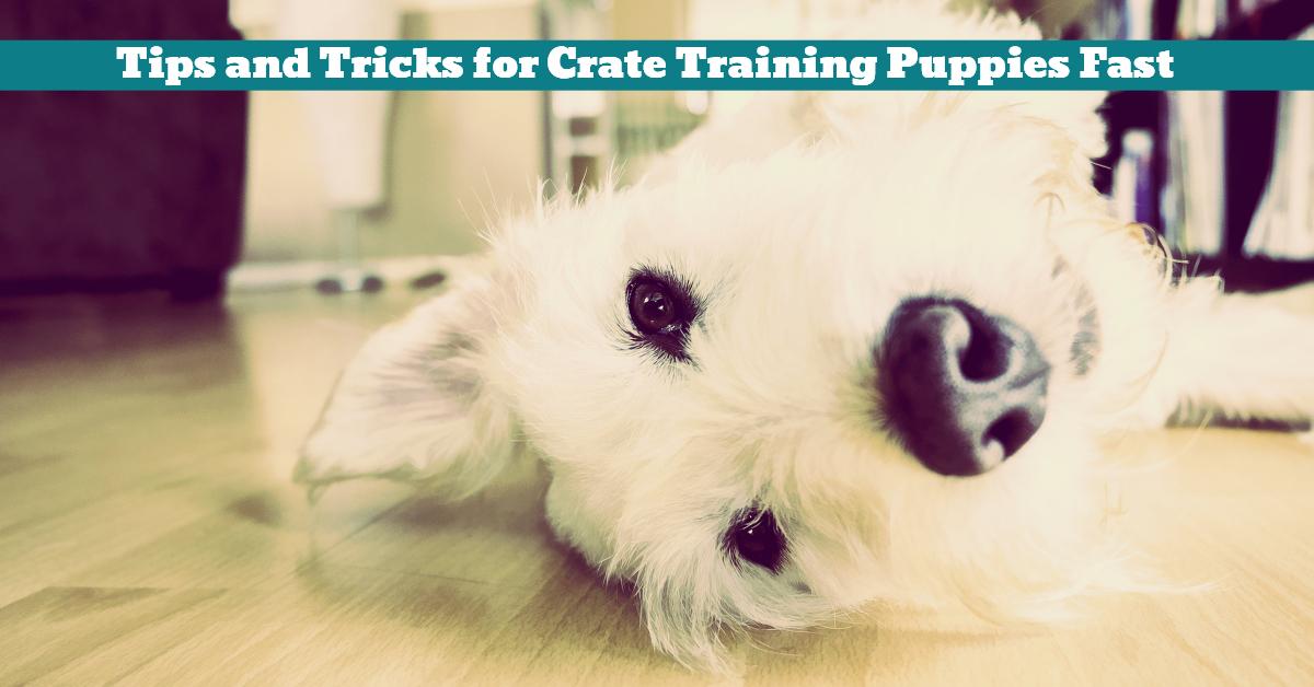 Dog_Puppy_Crate_Training