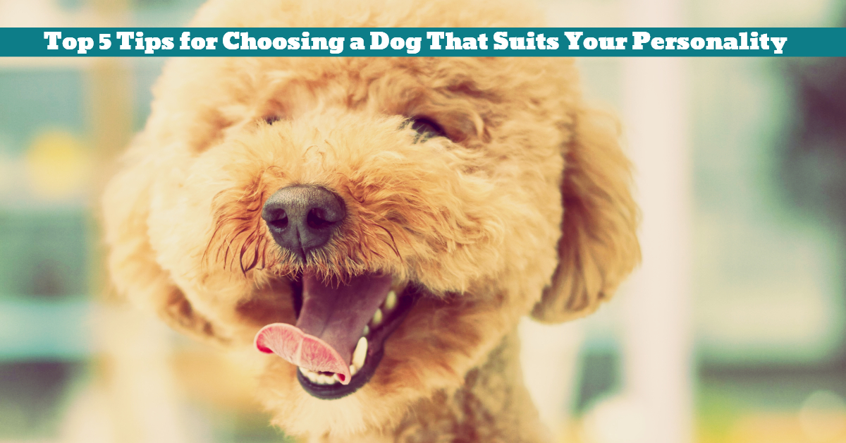 Dog_Suited_Personalized_Choice_Types_Personality
