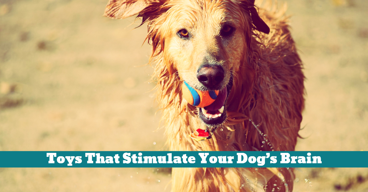 Dog_Toys_Stimuli_Brain_Stimulation_Development_Learning