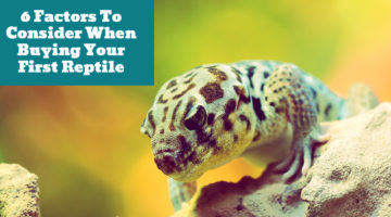 6 Factors To Consider When Buying Your First Reptile