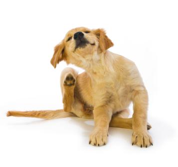 Puppy_Scratching