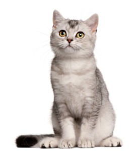 healthy_cat
