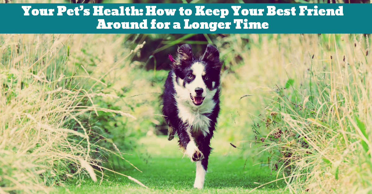 Pet_Health_Life_Longevity_Insurance