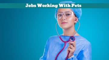Jobs Working With Pets