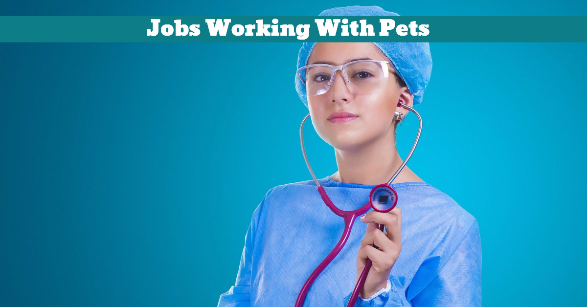 Pets_Animals_Jobs_Nurse_Groomer_Trainer
