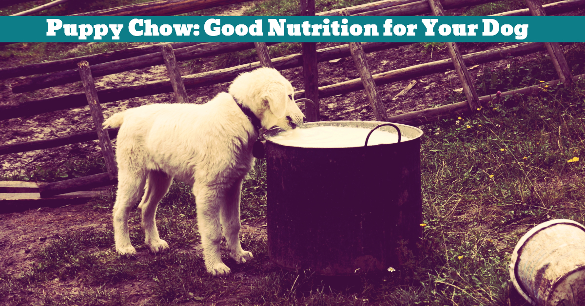 Dog_Puppy_Chow_Ingredients_Health_Nutrition