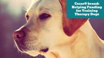 Cesar® brand: Helping Funding for Training Therapy Dogs