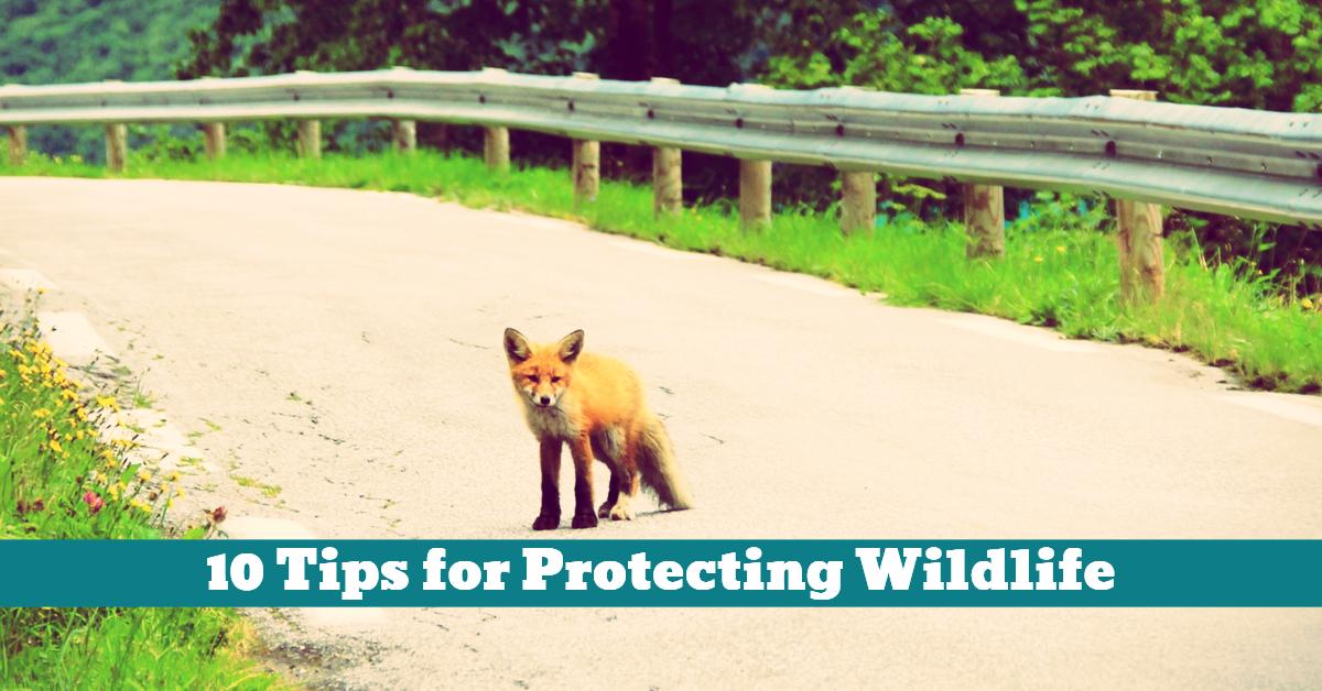 Wildlife_Protection_Habitat_Threat