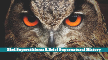 Bird Superstitions: A Brief Supernatural History
