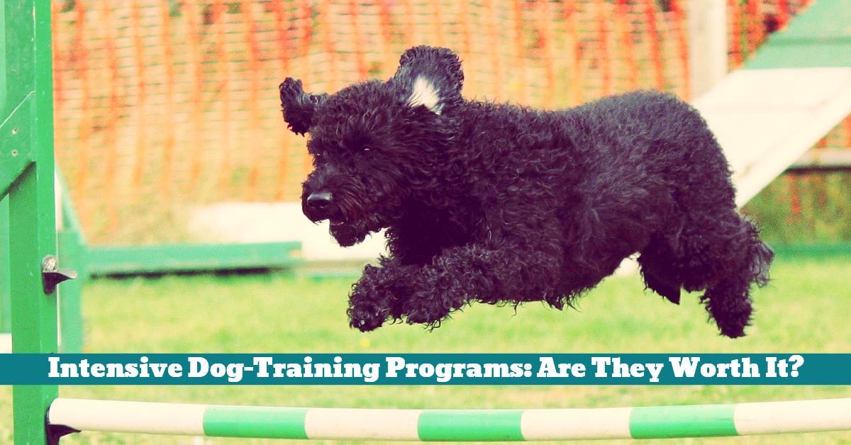 Dog_Training_Program_Intensive_Boot_Camp