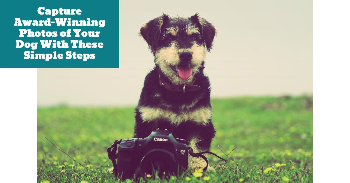 Dog_Photoshoot_Camera_DSLR
