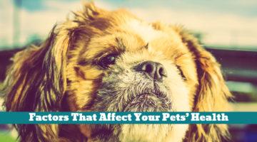 Factors That Affect Your Pets' Health