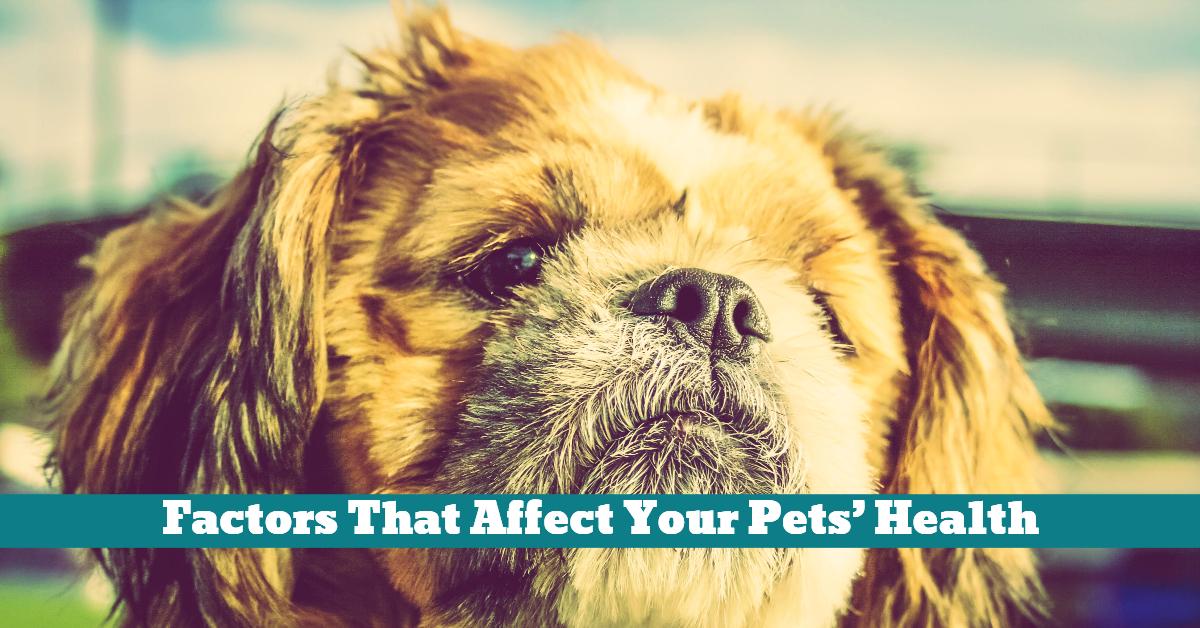 Pet_Health_Anxiety_Diet_Allergies_Injury