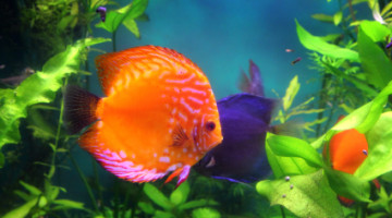 Tank Dynamics: How to Make a Great Space for Fish