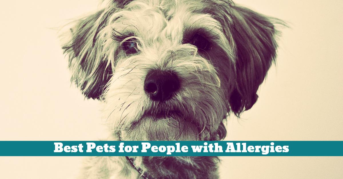 Pet_Allergy_Sufferer