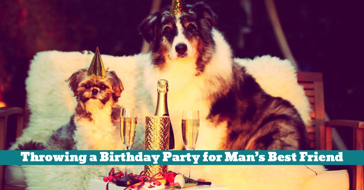 Pet_Dog_Birthday_Party_Celebration_Play_Treats