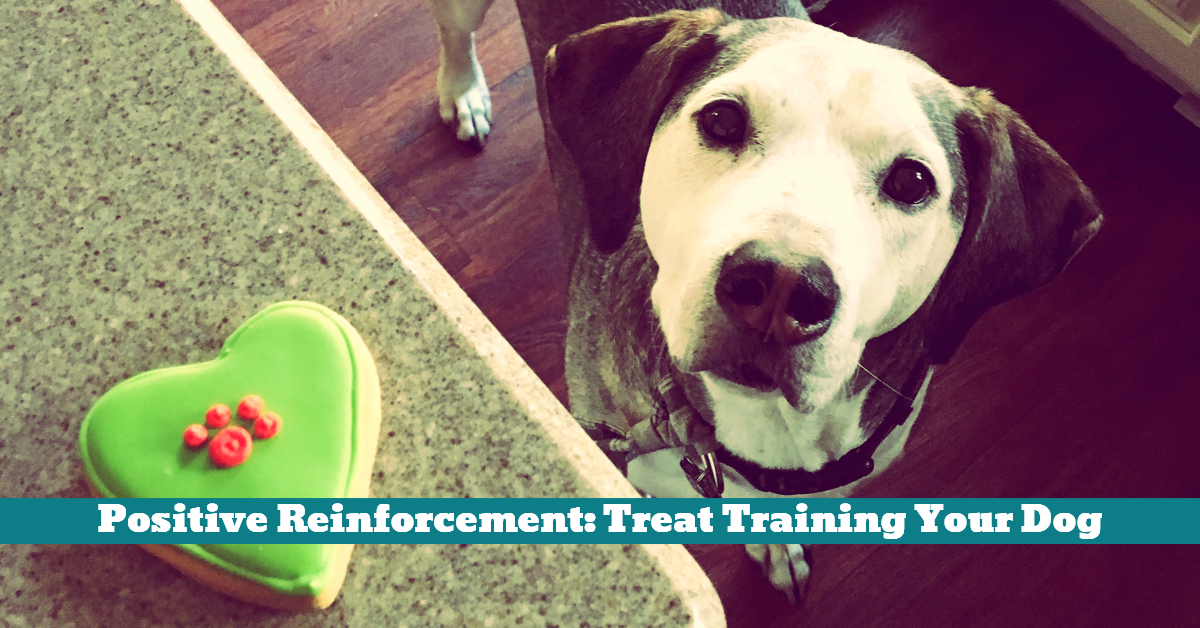 Dog_Treat_Training_Timing_Reward_Speech_Command