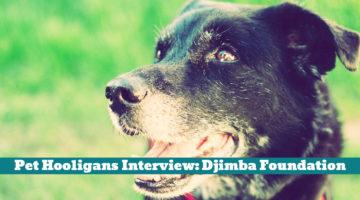 Pet Hooligans Interview: Djimba Foundation