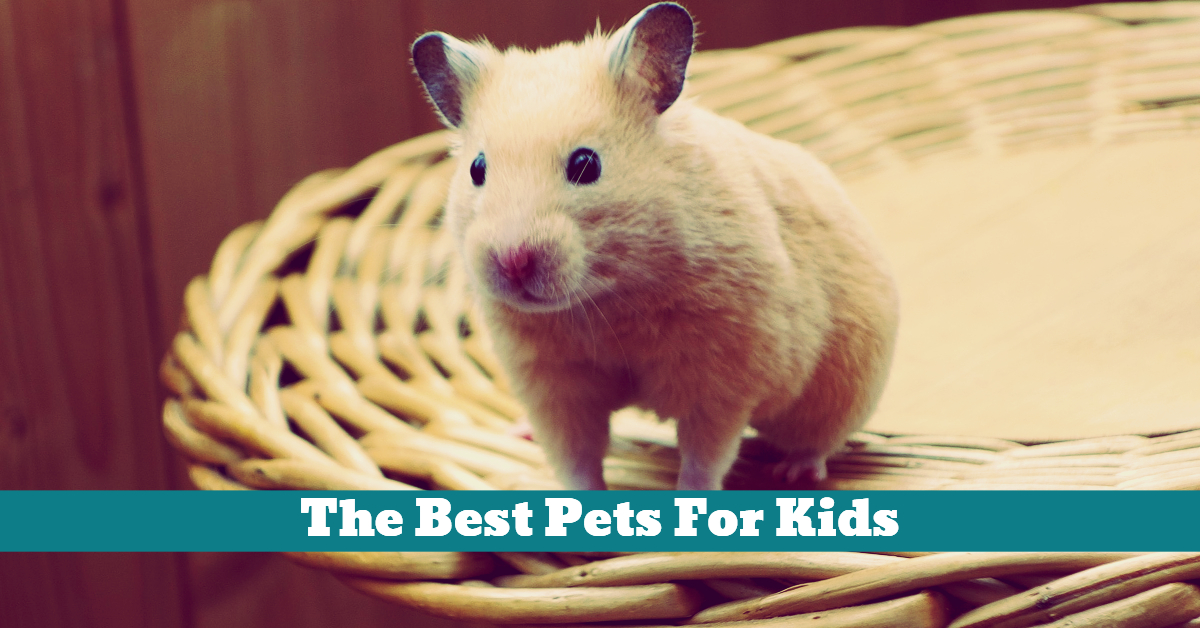 Pets_Small_Kids_Children_Hamster_Guinea_Pig_Gerbil