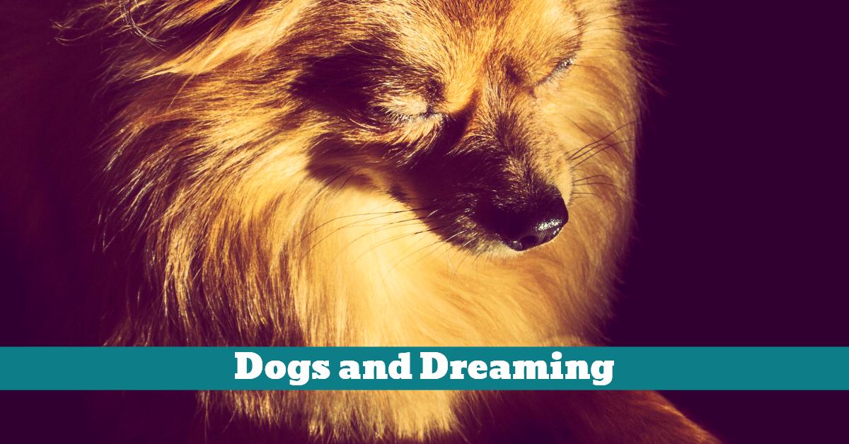 Dog_Sleep_Dreaming_State