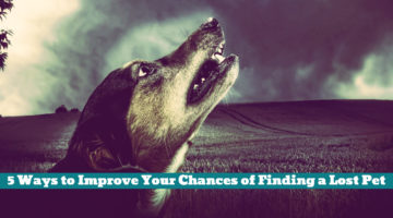 5 Ways to Improve Your Chances of Finding a Lost Pet