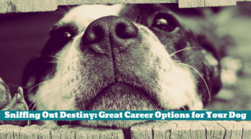 Sniffing Out Destiny: Great Career Options for Your Dog